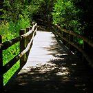 Nature Path © by Dawn M. Becker