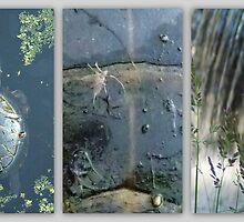 Lakeside Stories... by LindaR