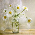 Daisies by Mandy Disher