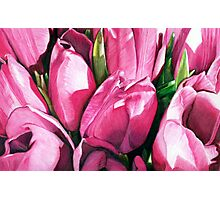 Pink Tulips in Coloured Pencil Photographic Print