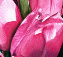 Pink Tulips in Coloured Pencil Sticker