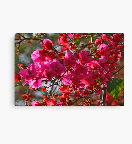 Light and Colour Canvas Print