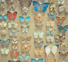 The Butterfly Collection II by Cassia Beck