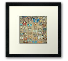 The Butterfly Collection II Framed Print