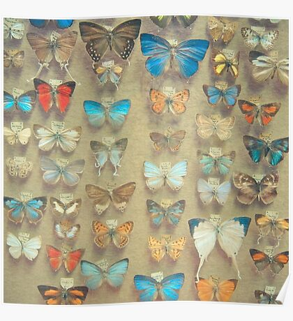 The Butterfly Collection II Poster