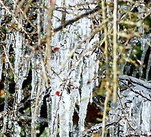 Ice Ice Baby by HannaKingdom