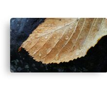 Gold leaf with raindrops Canvas Print