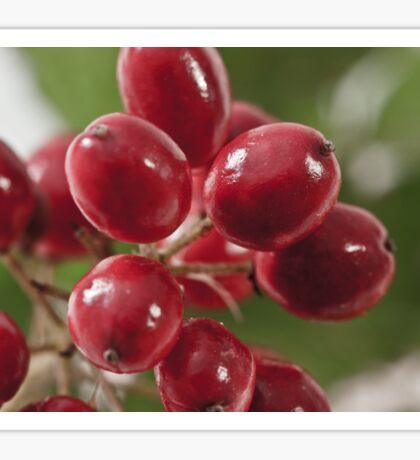 Wild Berry Cluster Macro Sticker