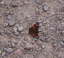 Butterfly on the Rocks by HannaKingdom
