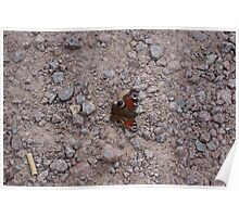 Butterfly on the Rocks Poster