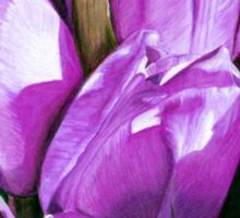Purple Tulips in Coloured Pencil Sticker