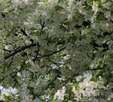 Full Bloom in White Sticker
