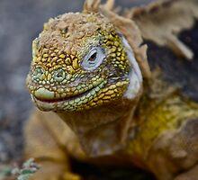 Land Iguana by James Girdler