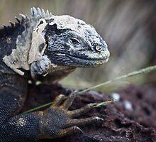 Land Iguana - Shedding by James Girdler