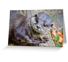 Beautiful Asian Otter Greeting Card