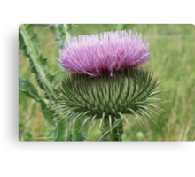 Spiny Canvas Print
