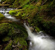 Forest Flowing by mikereid