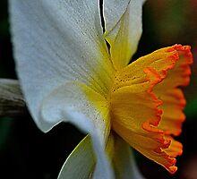 Good Morning Spring by MichelleAyn