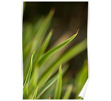 Flowing Grass Poster