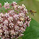 Buzz, Buzz Little Bee! by Tracy Wazny