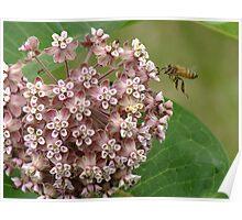 Buzz, Buzz Little Bee! Poster