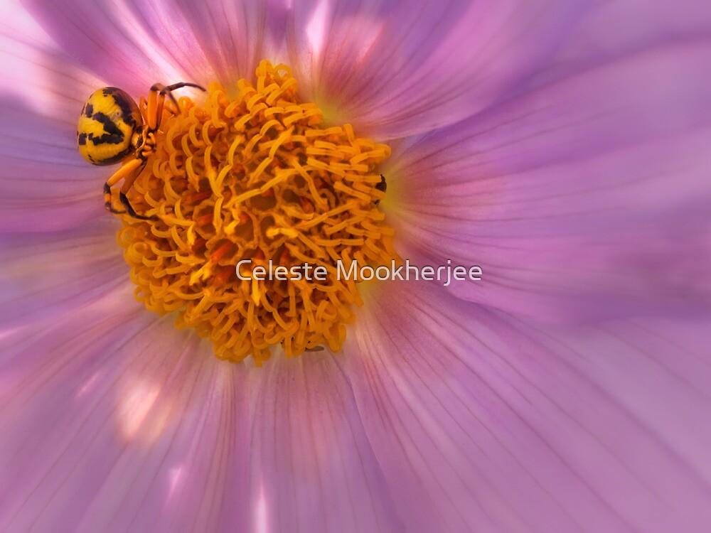 Spider lying in wait by Celeste Mookherjee