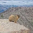 Marmot-Scape by Jay Ryser