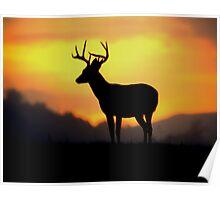 Sunrise Buck Poster