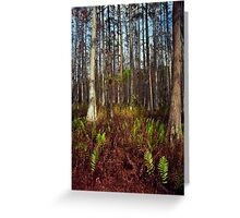 Dome's Edge. Split Oak. Greeting Card