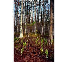 Dome's Edge. Split Oak. Photographic Print