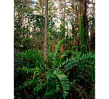 Leather Fern Portrait. Photographic Print