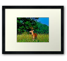 """""""Welcome to My World"""" Framed Print"""