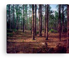 Pine Forest #1. Split Oak. Canvas Print