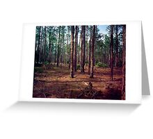 Pine Forest #1. Split Oak. Greeting Card