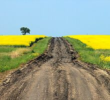 A Muddy Farm Road and A Lone Tree by Stephen Thomas
