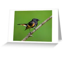 Little Redstart Greeting Card