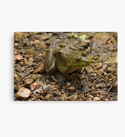 Frog January Canvas Print