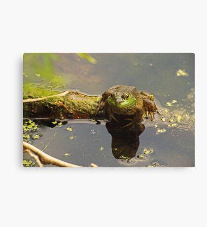 Frog February Canvas Print