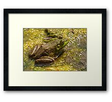 Frog March Framed Print