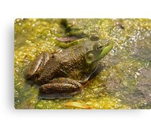 Frog March Metal Print