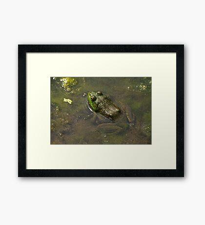 Frog April Framed Print