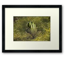 Frog May Framed Print