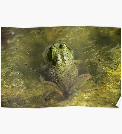 Frog May Poster