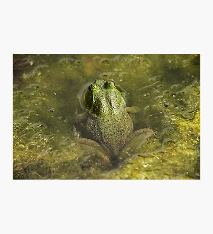 Frog May Photographic Print