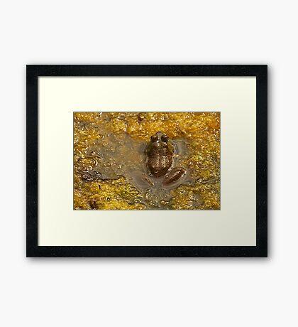 Frog July Framed Print