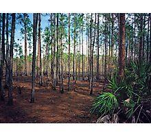 Pine Forest #3. Split Oak. Photographic Print