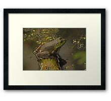 Frog September Framed Print