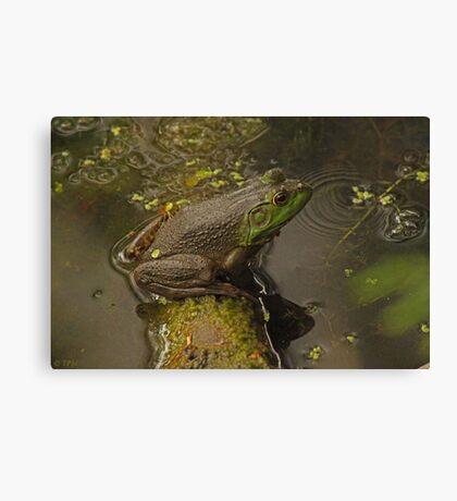 Frog September Canvas Print