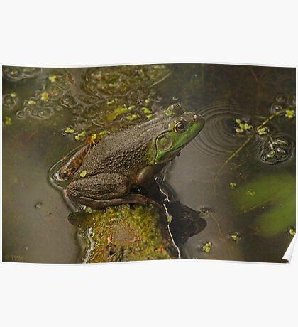 Frog September Poster