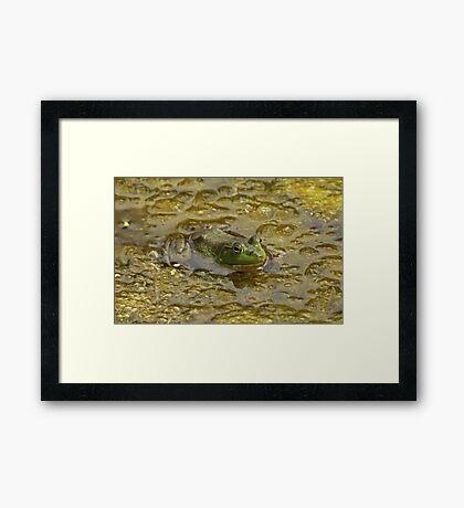 Frog October Framed Print
